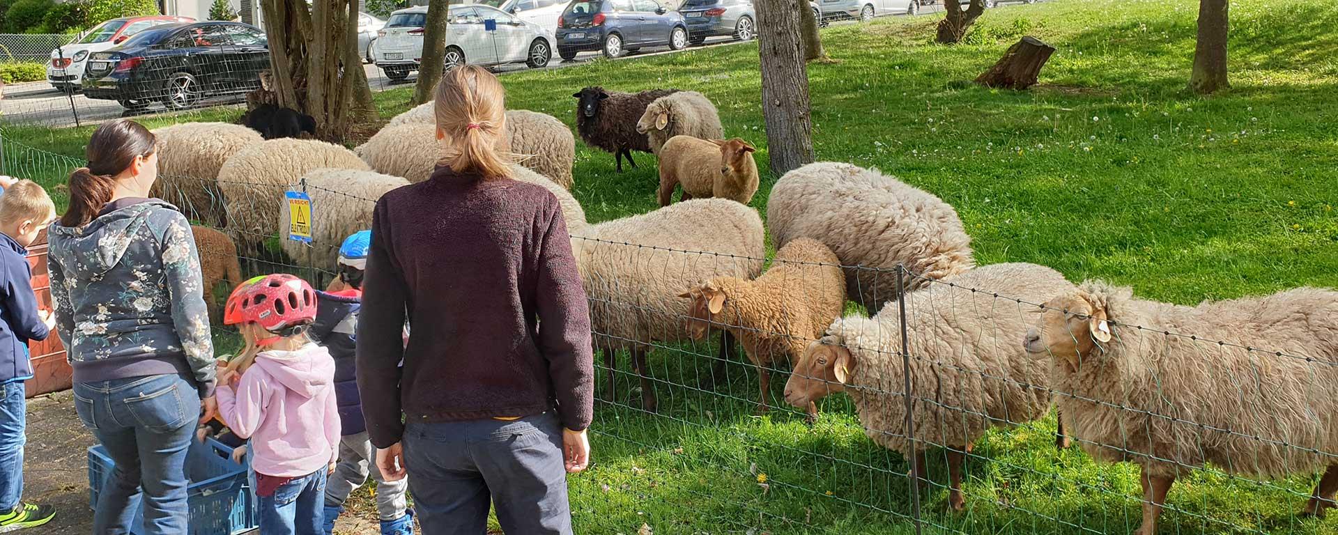 Schafe in Lauchhau-Lauchäcker - von Treffpunkt-Leben-Lauchhau-Lauchäcker